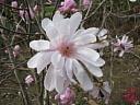 花の写真・小