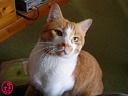 猫の写真・小